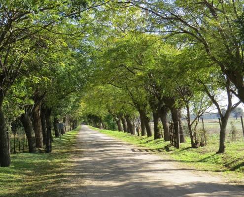 Camino Ignaciano slide 2