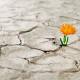 esperanza-flor-desierto
