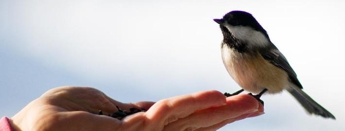 bird-in-a-hand-terry-elniski